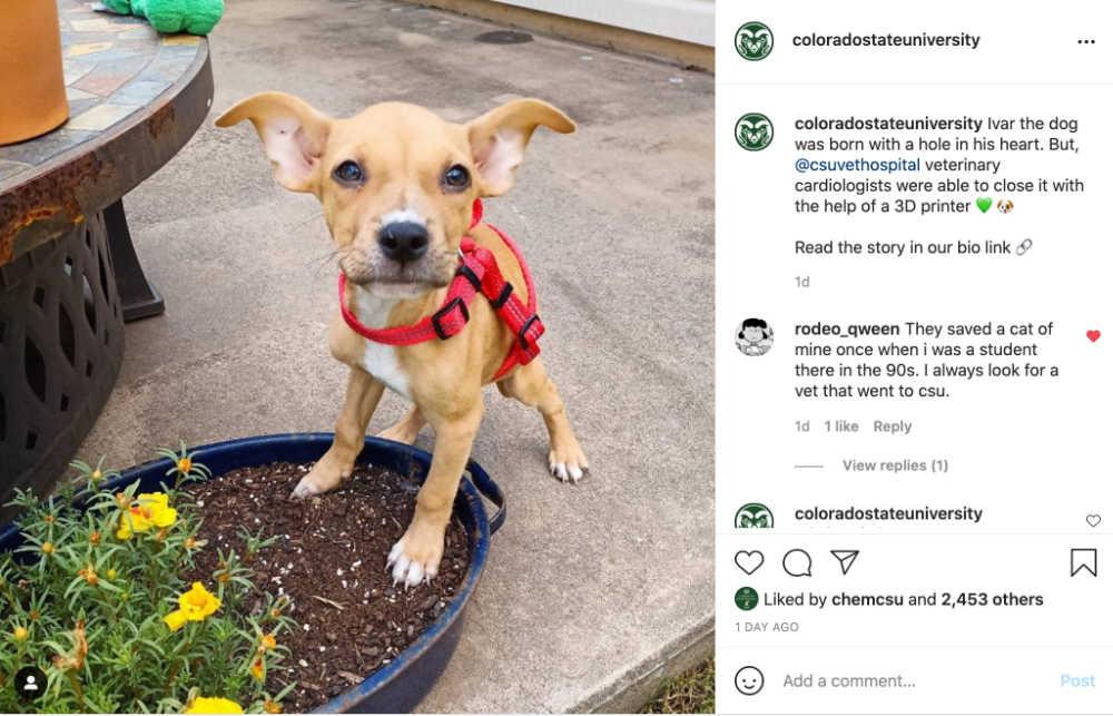 Screenshot of Ivar the puppy post on CSU's Instagram